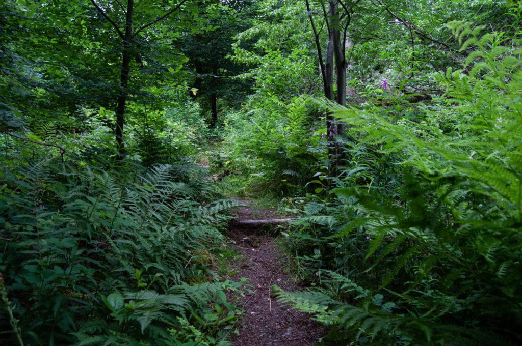 Der Weg führt auch schon mal durch einen Dschungel