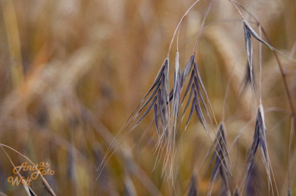 Gras im Feld