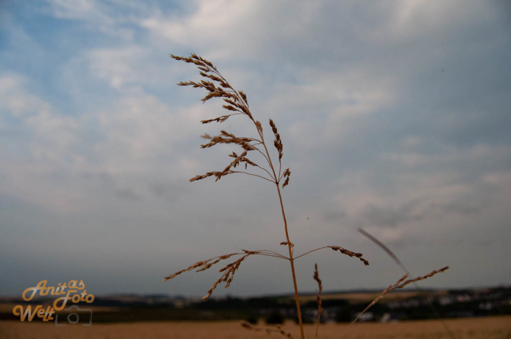 Gras im Himmel