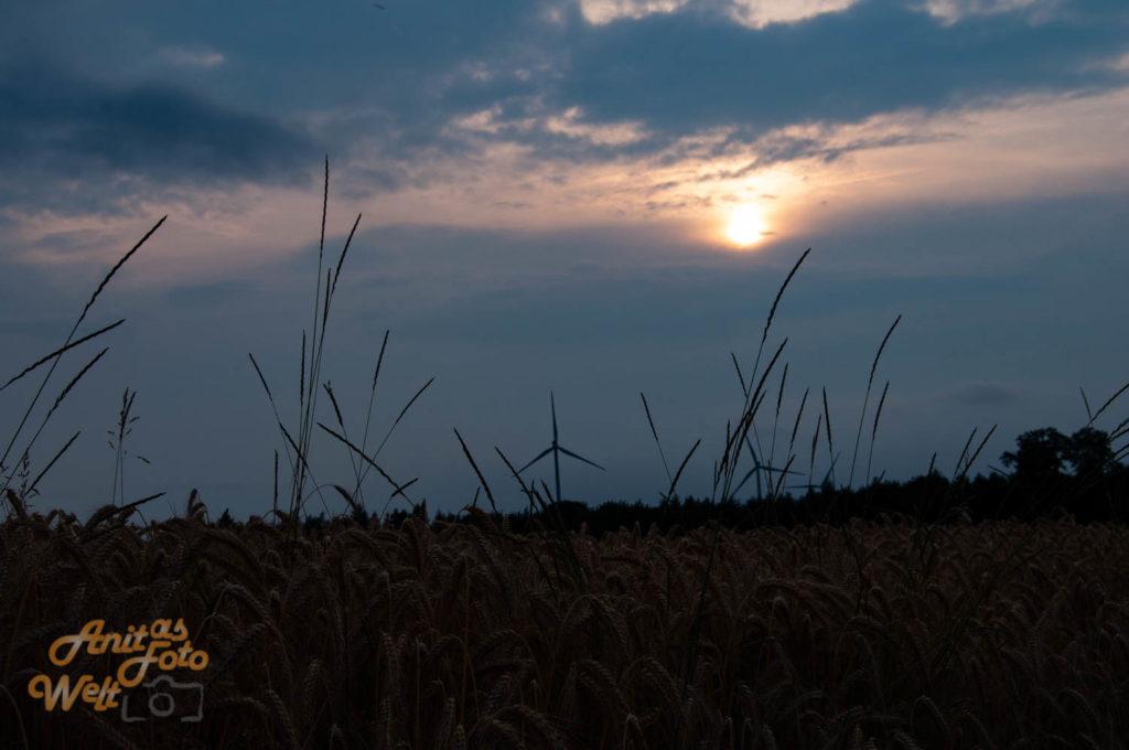 Untergehende Sonne über dem Getreidefeld
