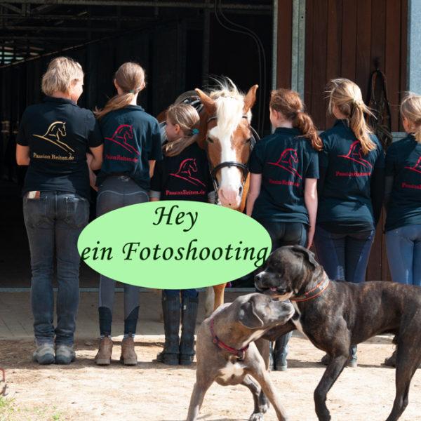 Hunde beim Fotoshooting