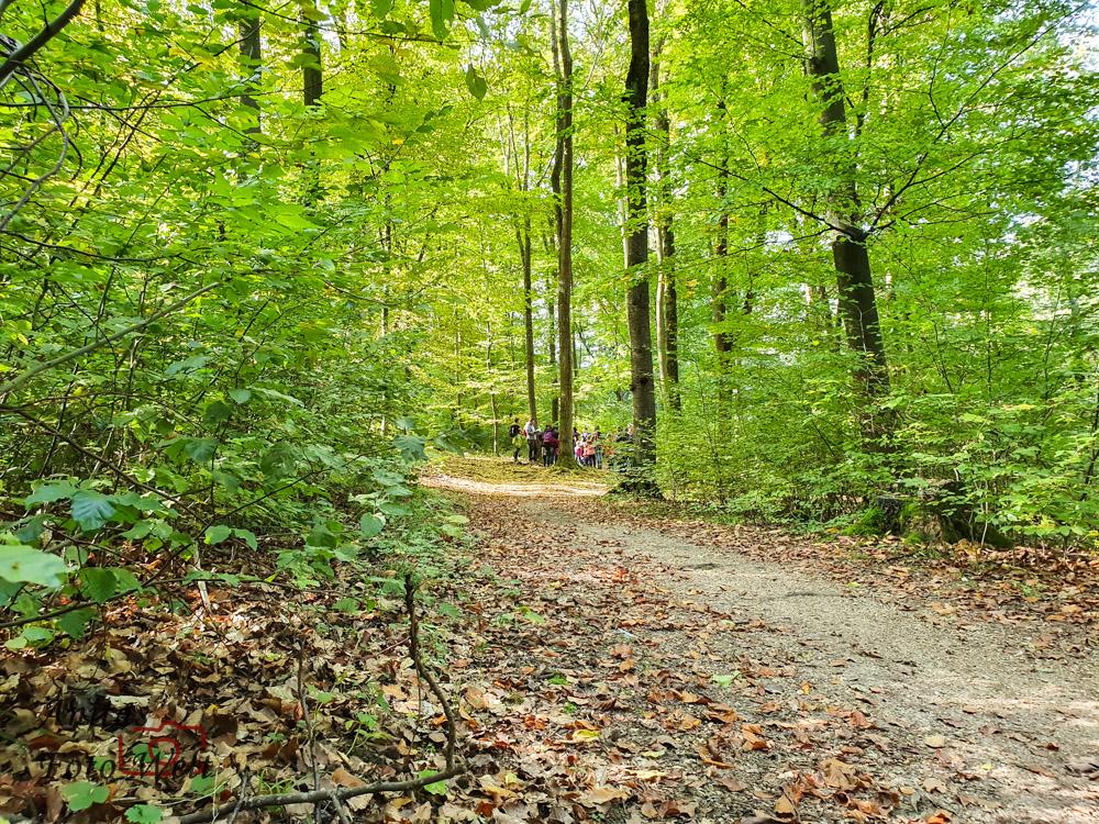 Blick in den Wald