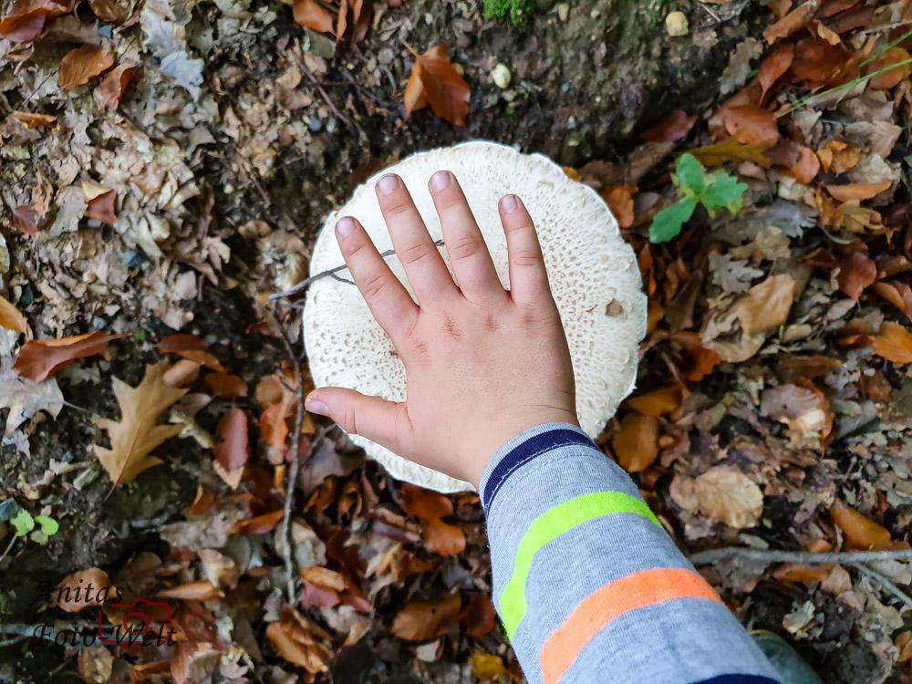 Wie eine Kinderhand so groß