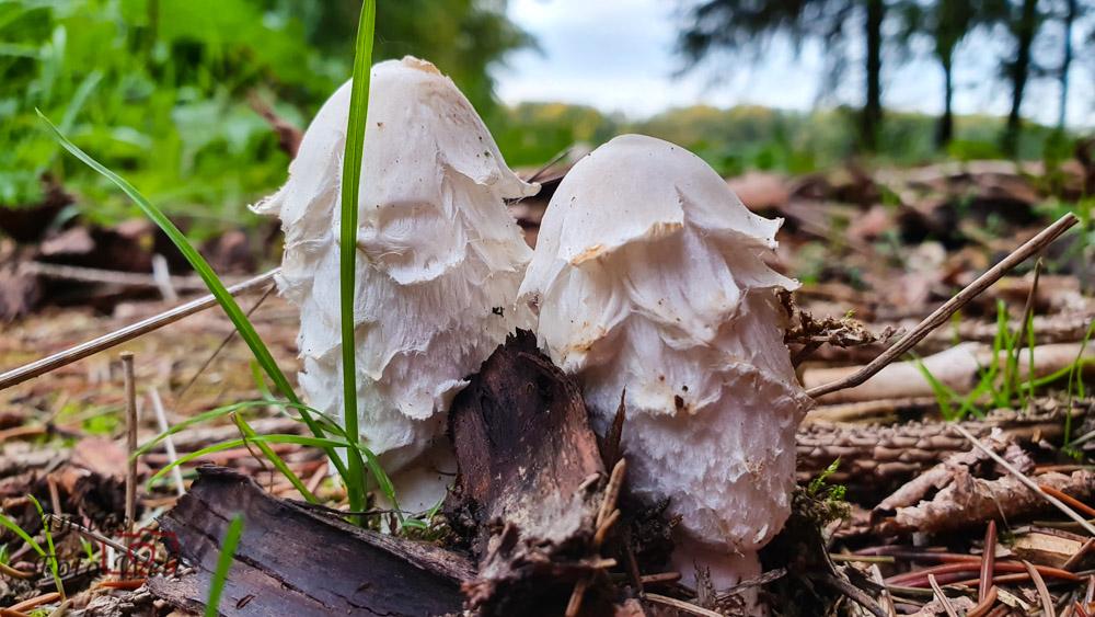 Pilze im Hunsrück