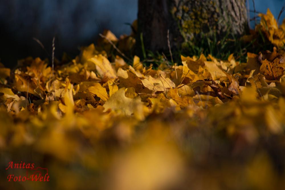 Schlurfen durch das Herbstlaub