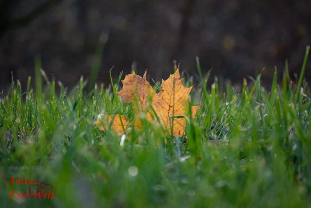 Blatt im Gras