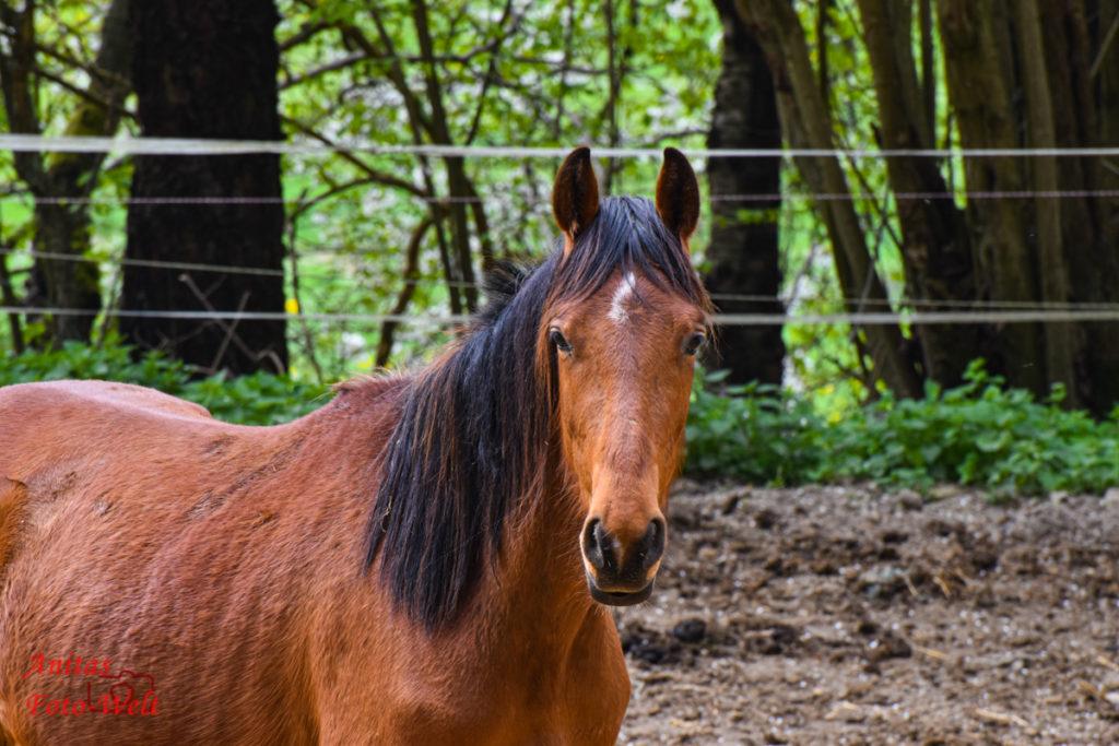 Ein Pferd schaut nach uns :-)