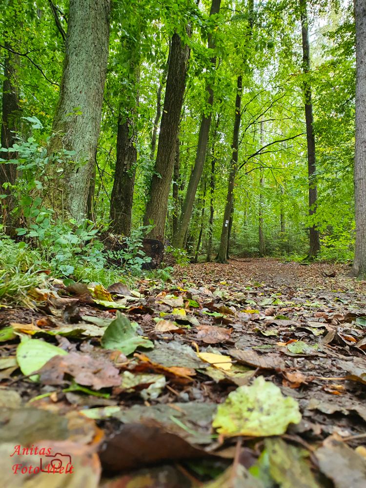 Waldweg zum Kyrillpfad