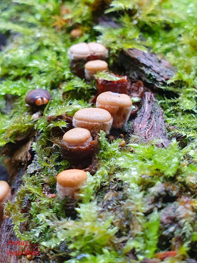 Pilze in einer Reihe